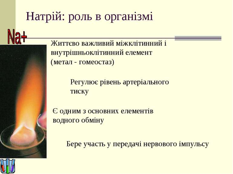 Натрій: роль в організмі Життєво важливий міжклітинний і внутрішньоклітинний ...