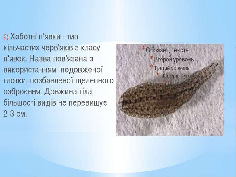 2) Хоботні п'явки - тип кільчастих черв'яків з класу п'явок. Назва пов'язана ...