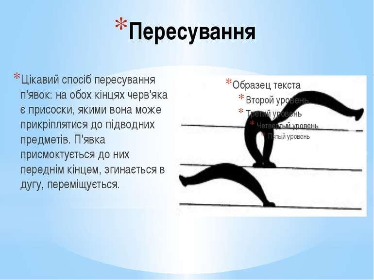 Пересування Цікавий спосіб пересування п'явок: на обох кінцях черв'яка є прис...