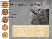 Рільництво у трипільців мотичне із застосуванням тяглової сили тварин орне Зо...