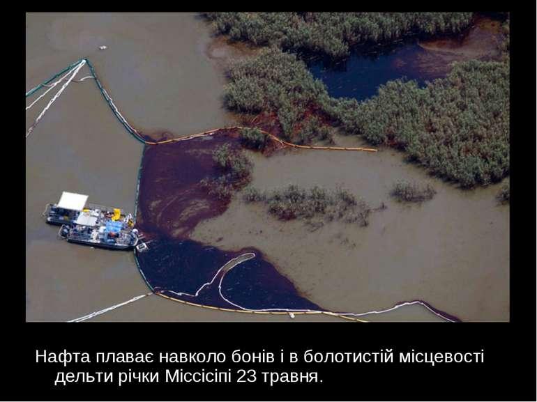 Нафта плаває навколо бонів і в болотистій місцевості дельти річки Міссісіпі 2...