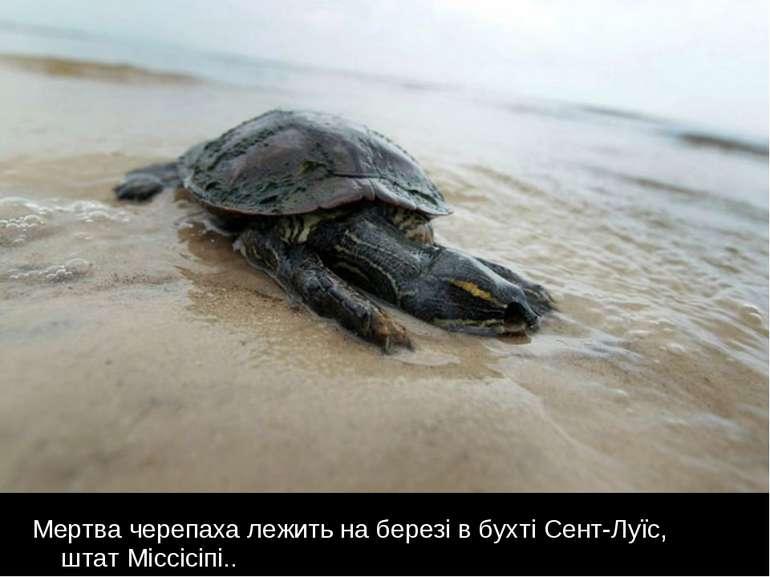 Мертва черепаха лежить на березі в бухті Сент-Луїс, штат Міссісіпі..