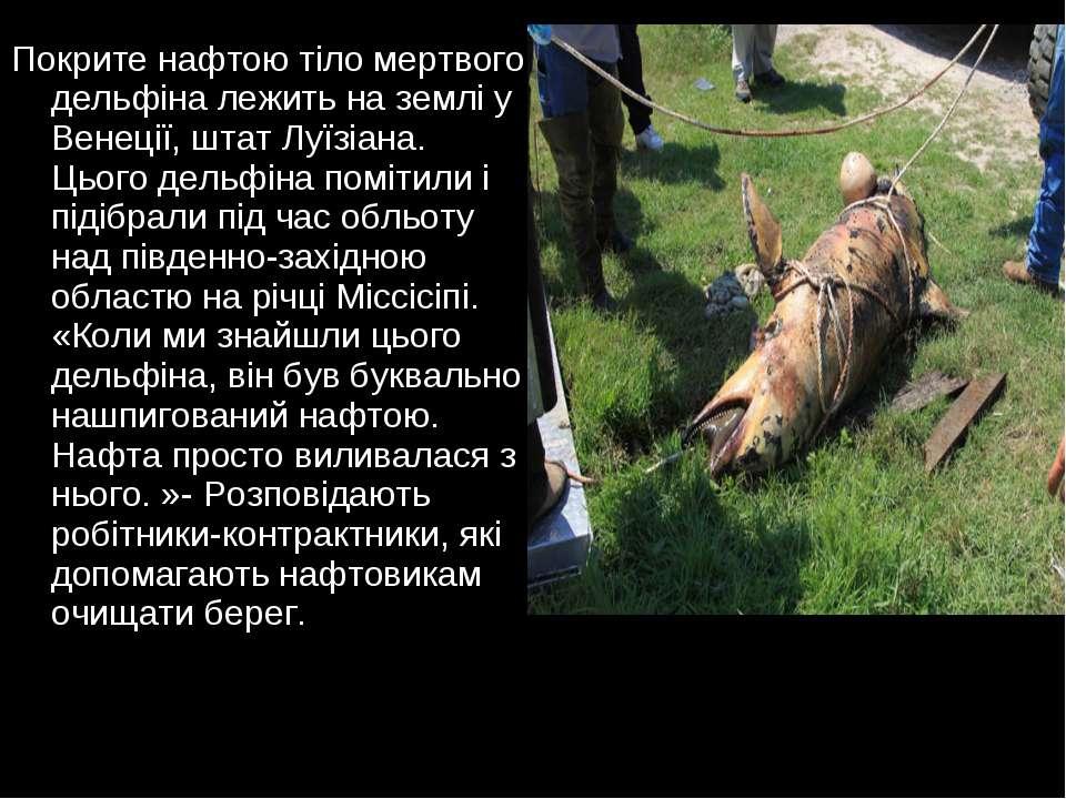 Покрите нафтою тіло мертвого дельфіна лежить на землі у Венеції, штат Луїзіан...