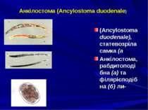 Анкілостома (Ancylostoma duodenale) (Ancylostoma duodenale), статевозріла сам...