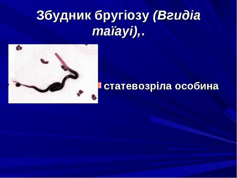 Збудник бругіозу (Вгидіа таїауі),. статевозріла особина