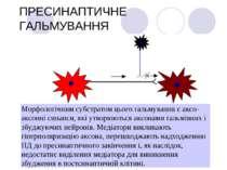 ПРЕСИНАПТИЧНЕ ГАЛЬМУВАННЯ Морфологічним субстратом цього гальмування є аксо-а...