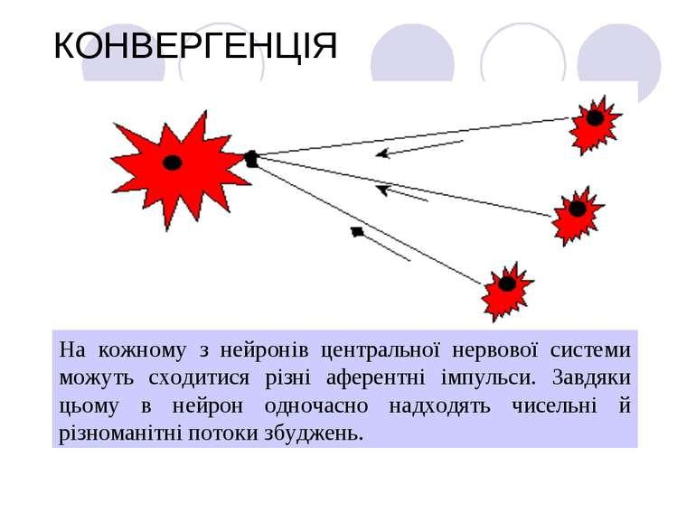 КОНВЕРГЕНЦІЯ На кожному з нейронів центральної нервової системи можуть сходит...