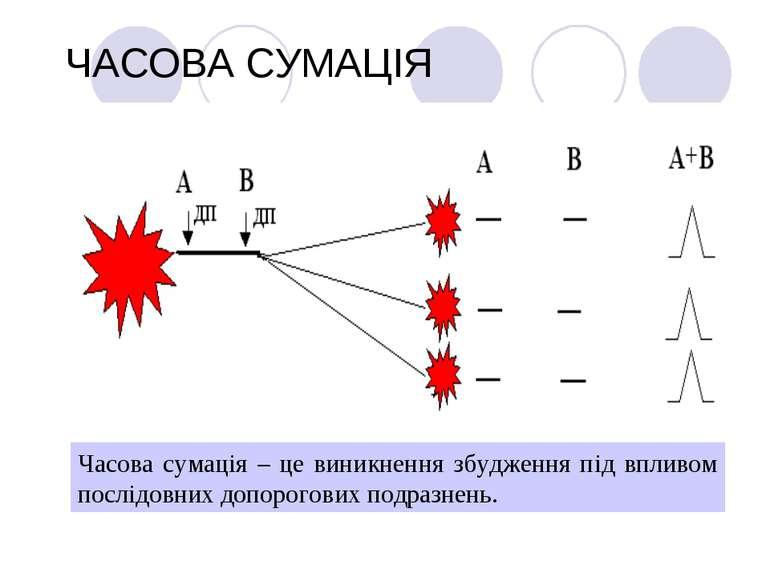 ЧАСОВА СУМАЦІЯ Часова сумація – це виникнення збудження під впливом послідовн...