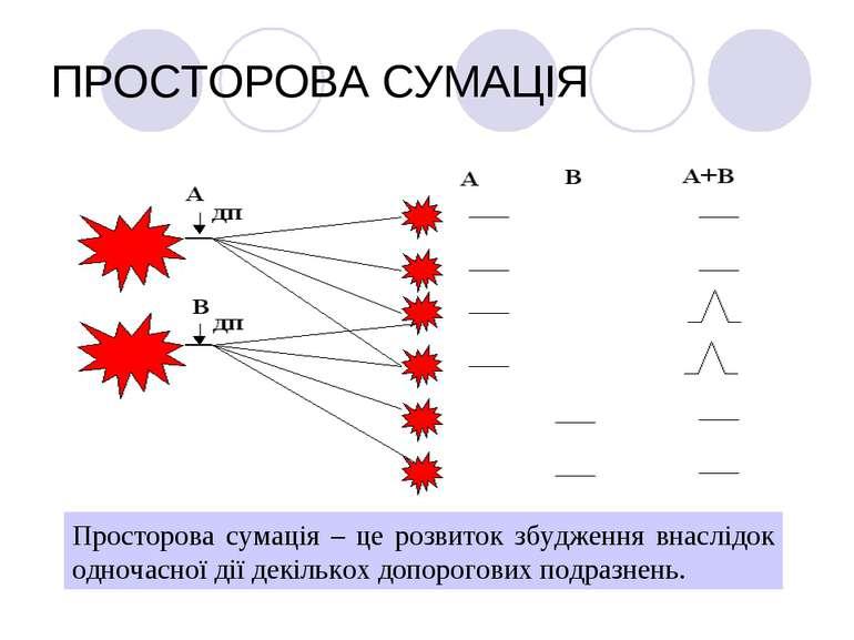 ПРОСТОРОВА СУМАЦІЯ Просторова сумація – це розвиток збудження внаслідок одноч...