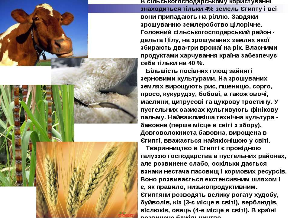 В сільськогосподарському користуванні знаходиться тільки 4% земель Єгипту і в...