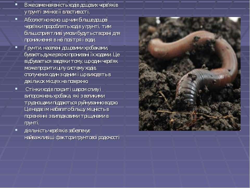 Вже саме наявність ходів дощових черв'яків у грунті змінює її властивості. А...