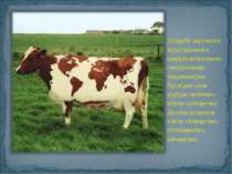 Потреби населення індустріальних центрів визначають спеціалізацію тваринництв...