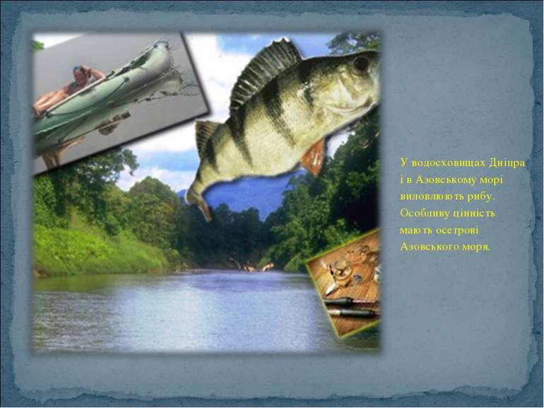У водосховищах Дніпра і в Азовському морі виловлюють рибу. Особливу цінність ...