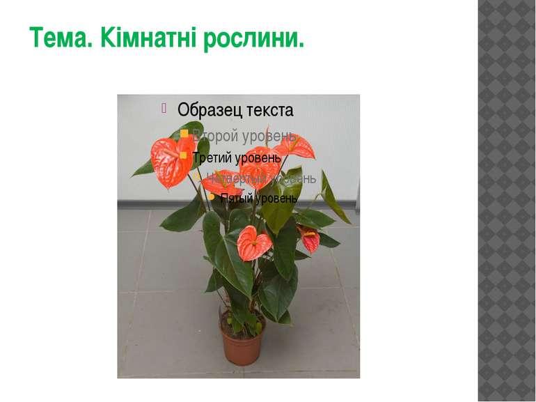 Тема. Кімнатні рослини.
