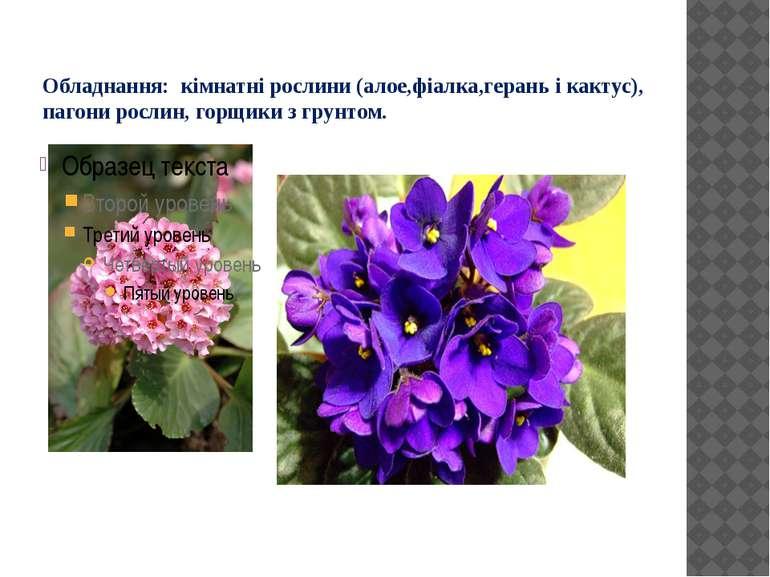 Обладнання: кімнатні рослини (алое,фіалка,герань і кактус), пагони рослин, го...