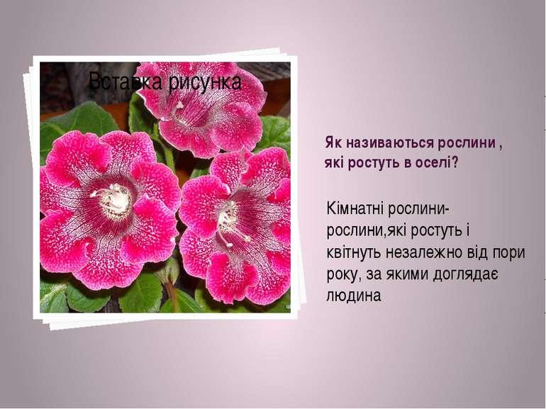 Як називаються рослини , які ростуть в оселі? Кімнатні рослини-рослини,які ро...