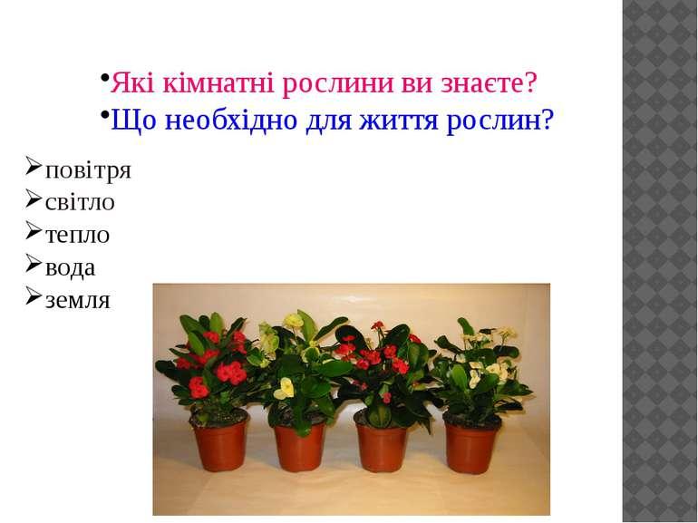 Які кімнатні рослини ви знаєте? Що необхідно для життя рослин? повітря світло...