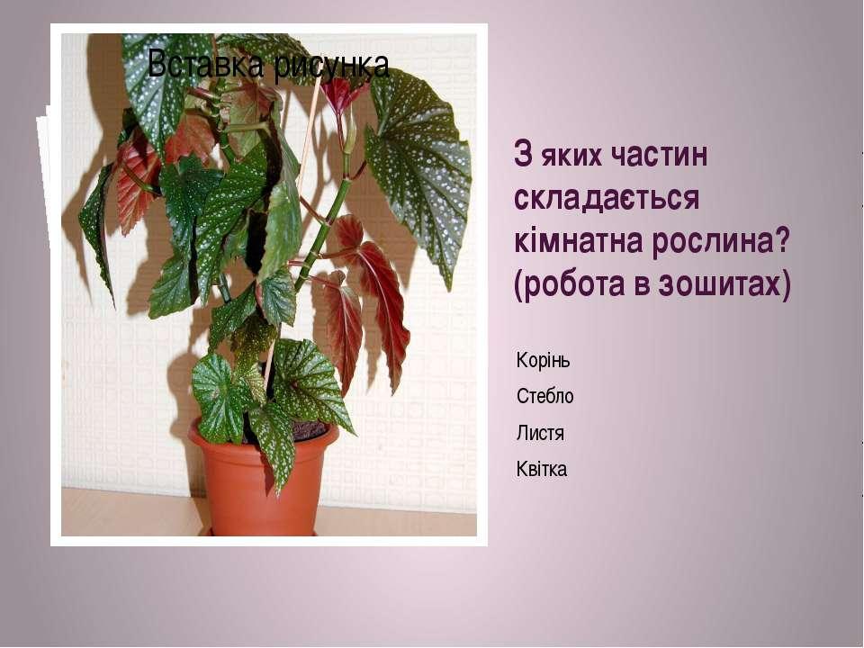 З яких частин складається кімнатна рослина? (робота в зошитах) Корінь Стебло ...
