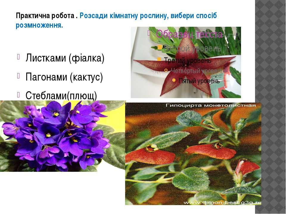 Практична робота . Розсади кімнатну рослину, вибери спосіб розмноження. Листк...