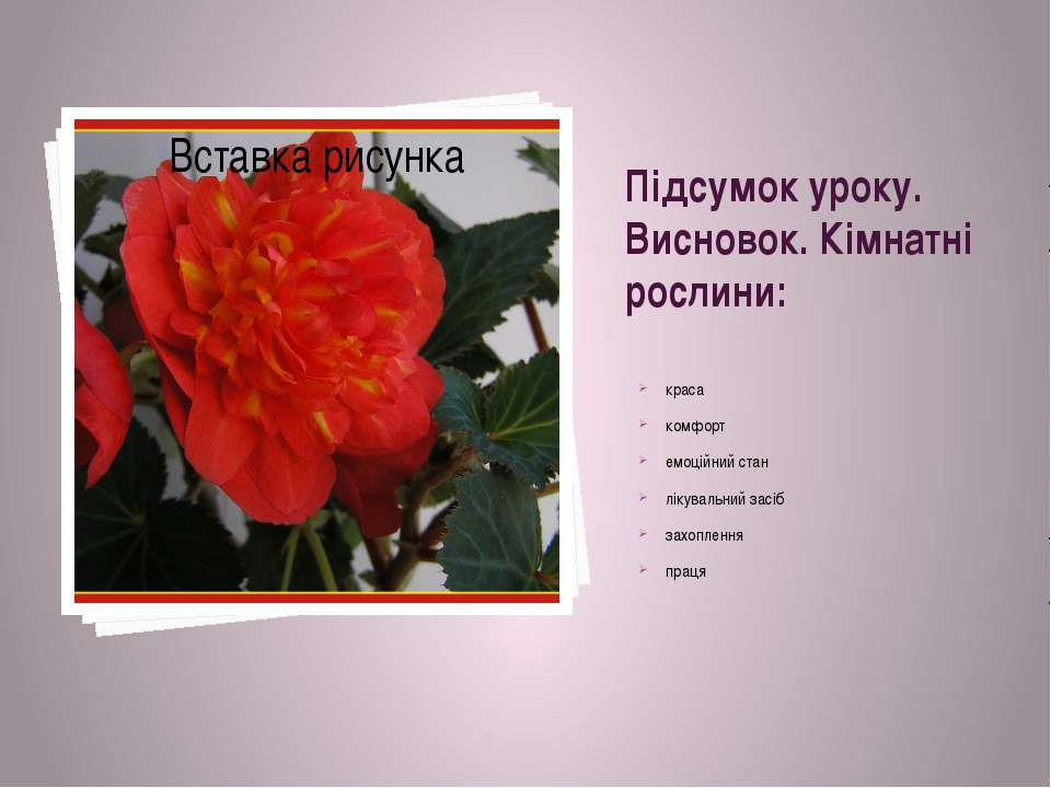 Підсумок уроку. Висновок. Кімнатні рослини: краса комфорт емоційний стан ліку...