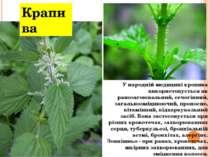 Крапива У народній медицині кропива використовується як ранозагоювальний, сеч...