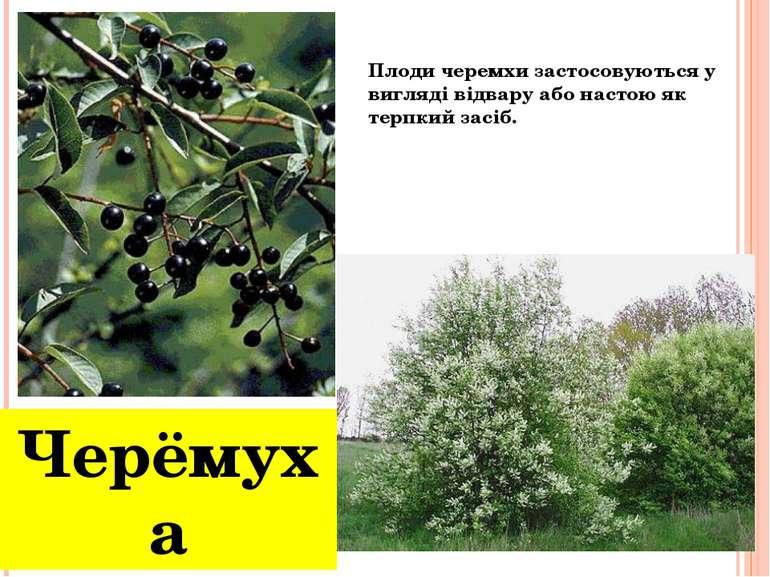 Черёмуха Плоди черемхи застосовуються у вигляді відвару або настою як терпкий...