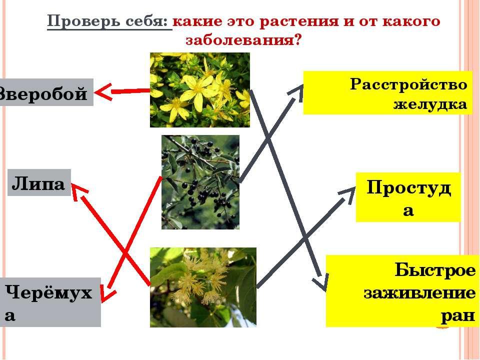 Проверь себя: какие это растения и от какого заболевания? Быстрое заживление ...