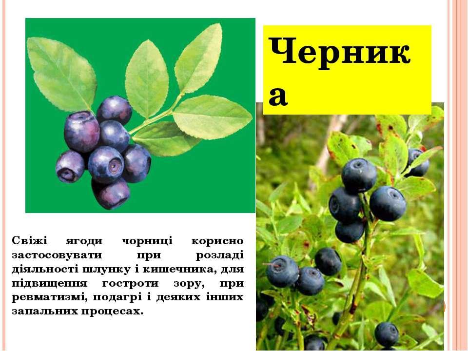 Черника Свіжі ягоди чорниці корисно застосовувати при розладі діяльності шлун...