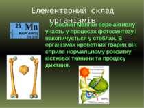 У рослин Манган бере активну участь у процесах фотосинтезу і накопичується у ...