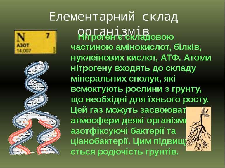 Елементарний склад організмів Нітроген є складовою частиною амінокислот, білк...