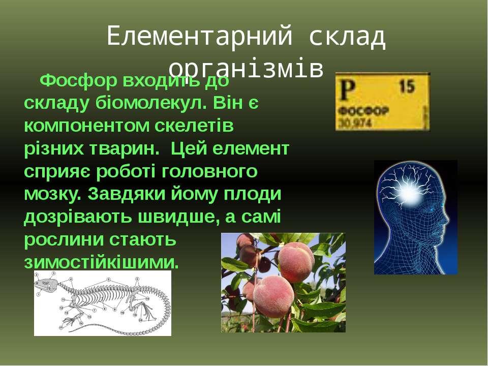 Елементарний склад організмів Фосфор входить до складу біомолекул. Він є комп...