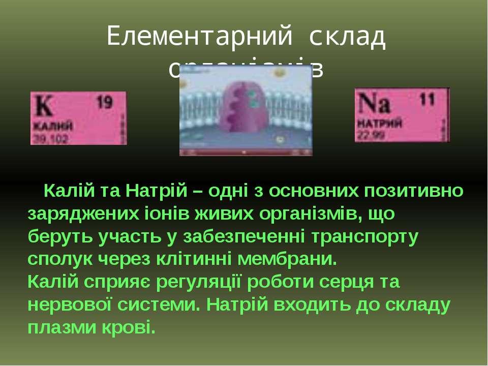 Елементарний склад організмів Калій та Натрій – одні з основних позитивно зар...