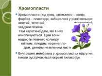 Хромопласти (від грец. хроматос – колір, фарба) – пластиди, забарвлені у різн...