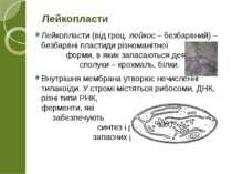 Лейкопласти (від грец. лейкос – безбарвний) – безбарвні пластиди різноманітно...