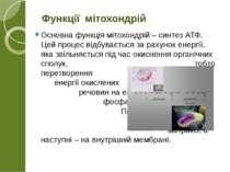 Основна функція мітохондрій – синтез АТФ. Цей процес відбувається за рахунок ...
