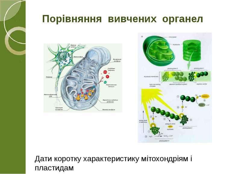 Порівняння вивчених органел Дати коротку характеристику мітохондріям і пластидам