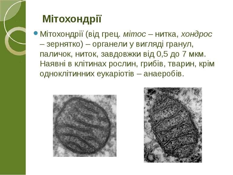 Мітохондрії (від грец. мітос – нитка, хондрос – зернятко) – органели у вигляд...