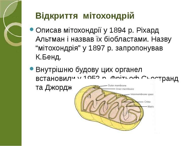 """Описав мітохондрії у 1894 р. Ріхард Альтман і назвав їх біобластами. Назву """"м..."""