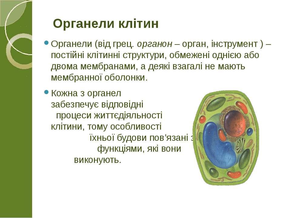 Органели (від грец. органон – орган, інструмент ) – постійні клітинні структу...