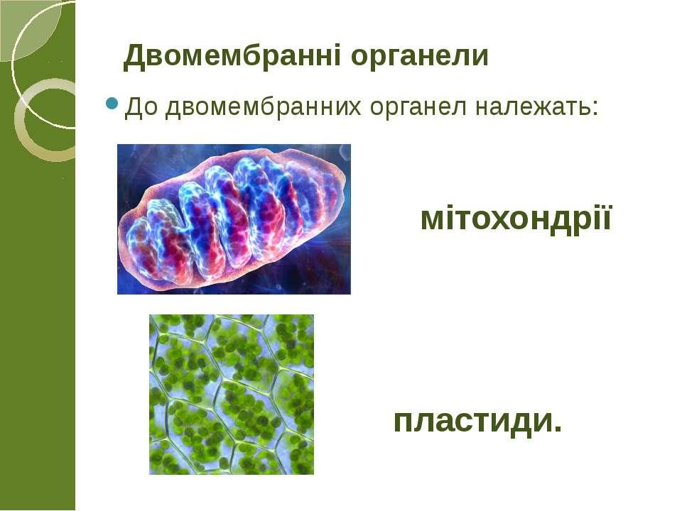 До двомембранних органел належать: Двомембранні органели мітохондрії пластиди.
