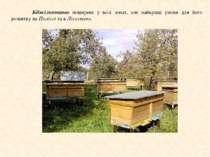 Бджільництво поширене у всіх зонах, але найкращі умови для його розвитку на П...