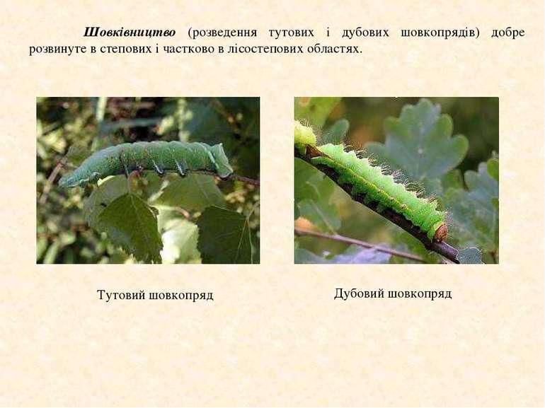 Шовківництво (розведення тутових і дубових шовкопрядів) добре розвинуте в сте...