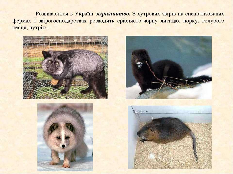 Розвивається в Україні звірівництво. З хутрових звірів на спеціалізованих фер...