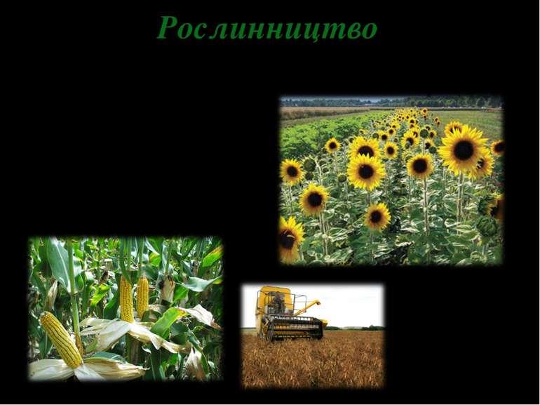 Рослинництво Зернові (пшениця, жито, ячмінь, овес, кукурудза, рис) Цукровий б...