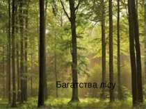 Багатства лісу