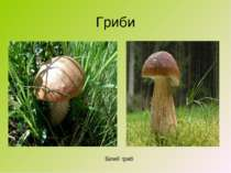 Гриби Білий гриб