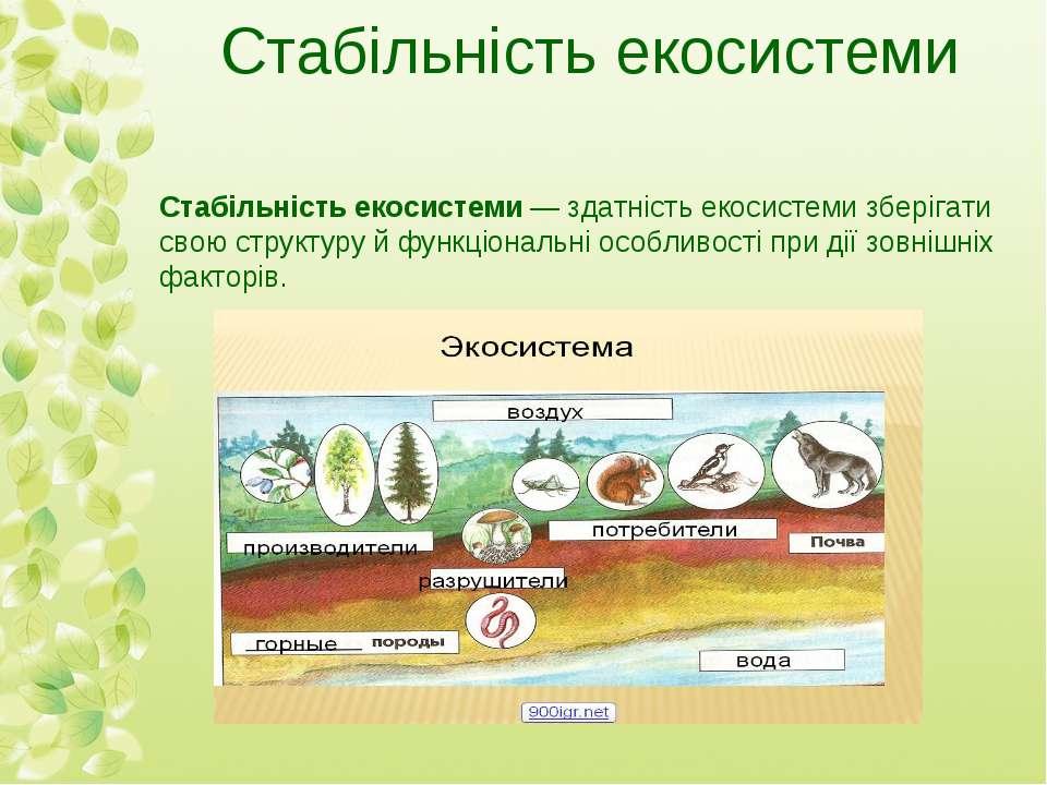 Стабільність екосистеми Стабільність екосистеми— здатність екосистеми зберіг...