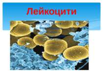 Лейкоцити