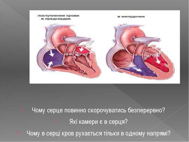 Чому серце повинно скорочуватись безперервно? Які камери є в серця? Чому в се...