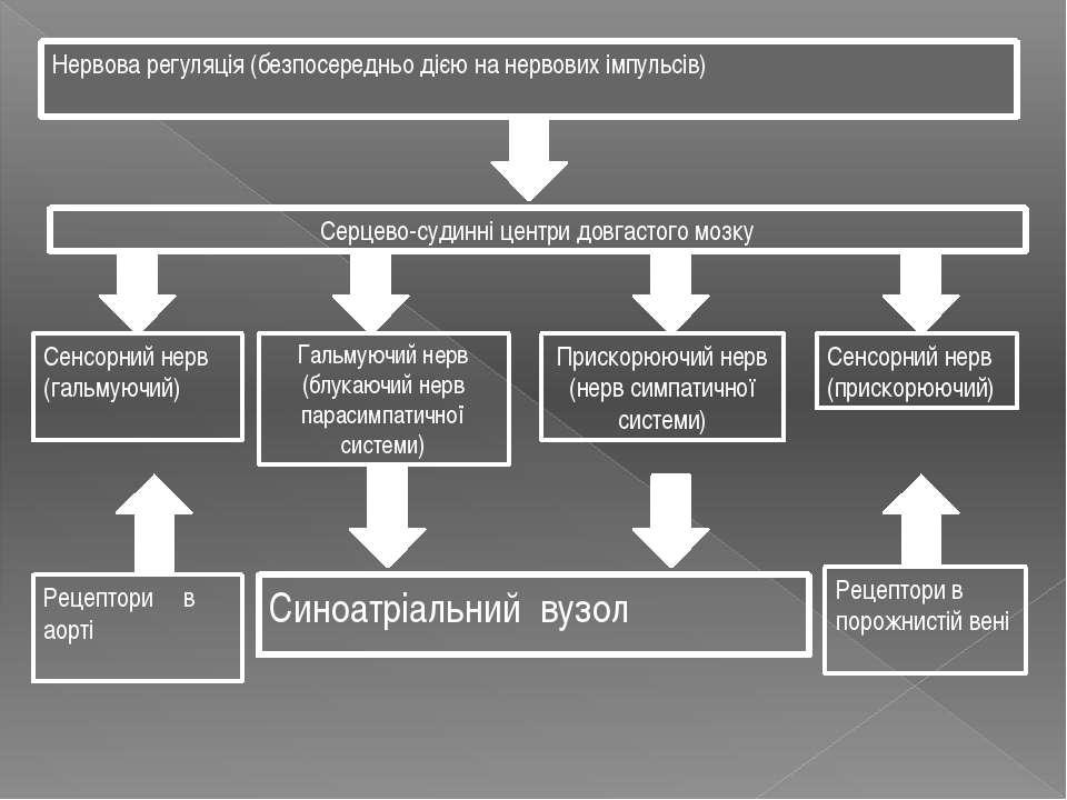 Нервова регуляція (безпосередньо дією на нервових імпульсів) Серцево-судинні ...